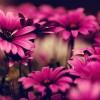 http://www.arabsharing.com/uploads/1434901281951.jpg