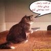 مواقف طريفة لاجمل القطط  من تجميعي وتصميمي  ...فكها وابتسم شوية