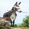 صور معبرة ...لكل حيوان صفة