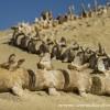 وادي الحيتان ...محافظة الفيوم ..بمصر