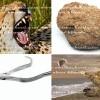 إذا رأيت الفهد بارز الأنياب فلا تظنه  يبتسم
